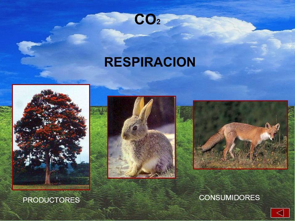 PRODUCTORES CONSUMIDORES RESPIRACION CO 2