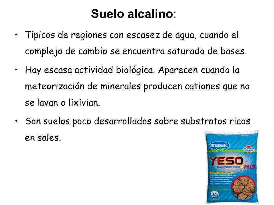 Suelo alcalino: Típicos de regiones con escasez de agua, cuando el complejo de cambio se encuentra saturado de bases. Hay escasa actividad biológica.