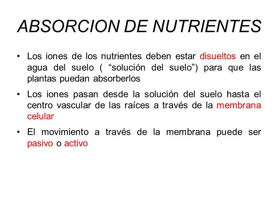 ABSORCION DE NUTRIENTES Los iones de los nutrientes deben estar disueltos en el agua del suelo ( solución del suelo) para que las plantas puedan absor
