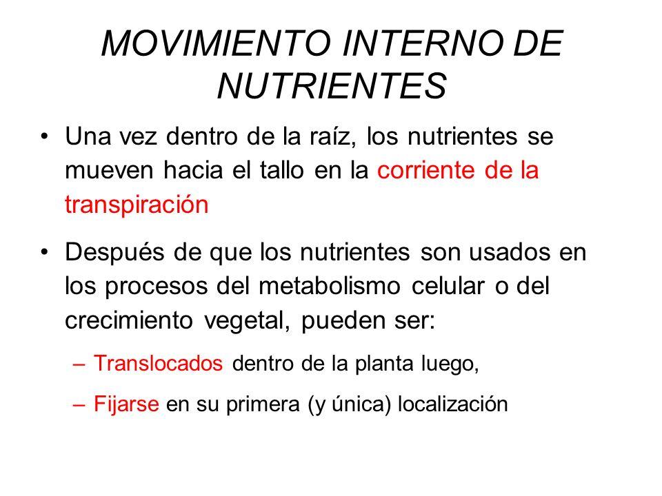 MOVIMIENTO INTERNO DE NUTRIENTES Una vez dentro de la raíz, los nutrientes se mueven hacia el tallo en la corriente de la transpiración Después de que