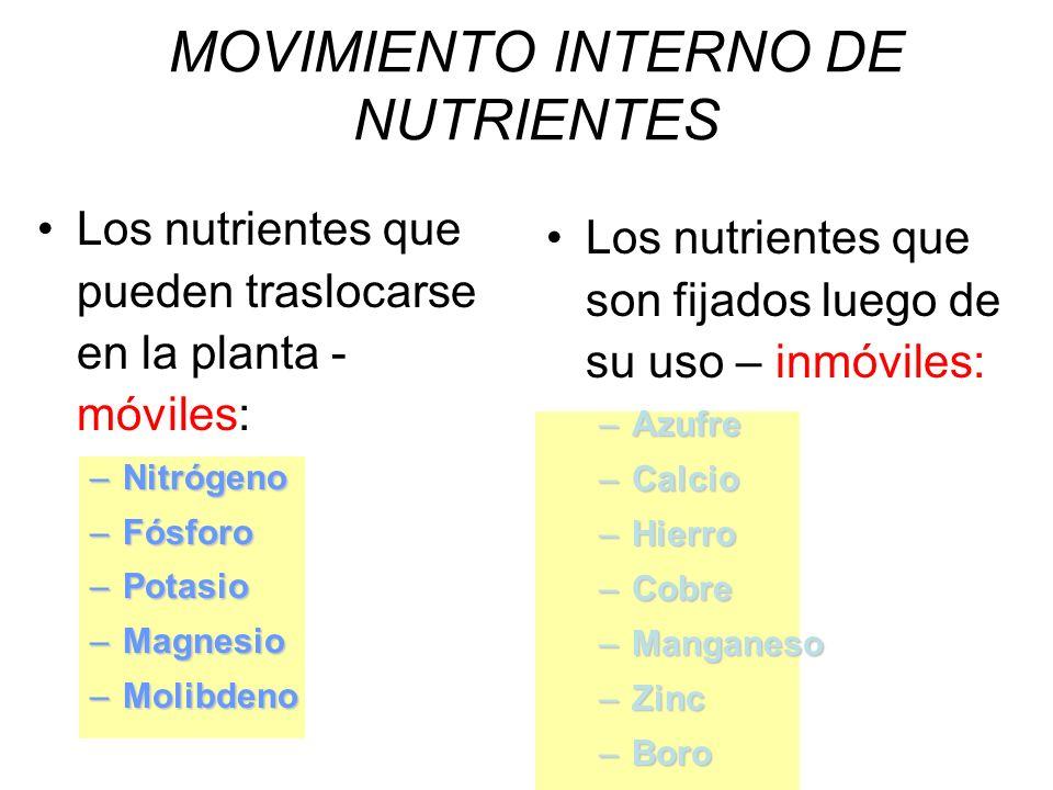 Los nutrientes que pueden traslocarse en la planta - móviles: –Nitrógeno –Fósforo –Potasio –Magnesio –Molibdeno Los nutrientes que son fijados luego d