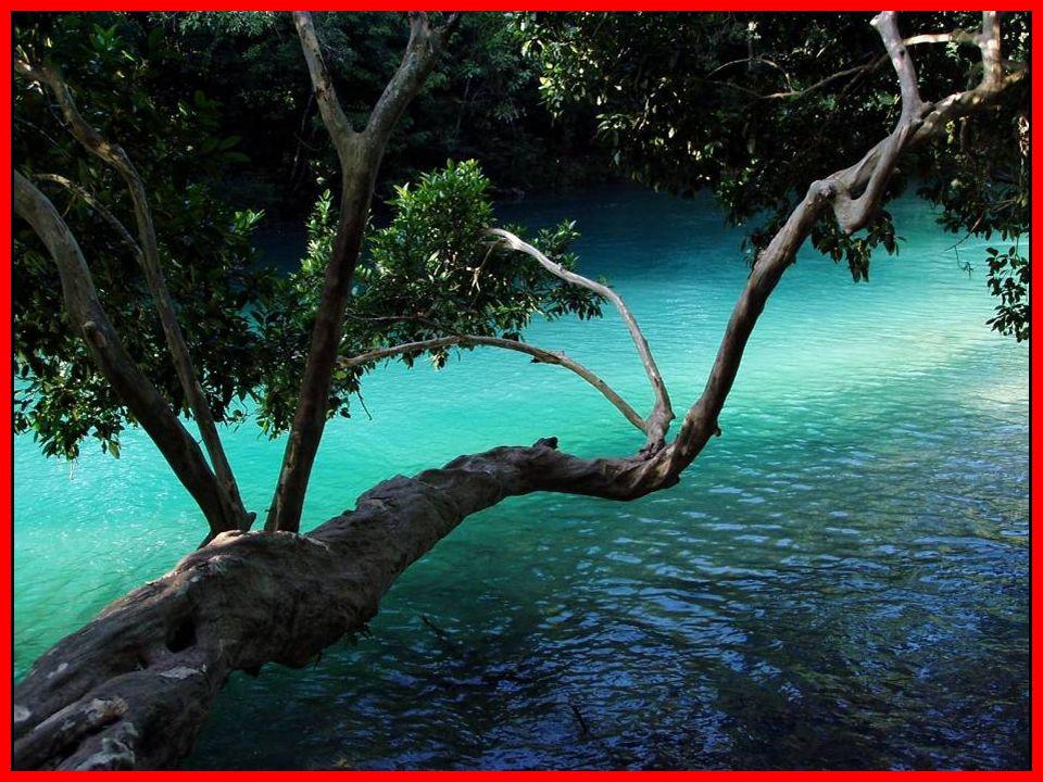 Serie de cascadas que se forman al descender el Río Agua Azul de manera escalonada, creando una serie de estanques ó albercas naturales que son conten