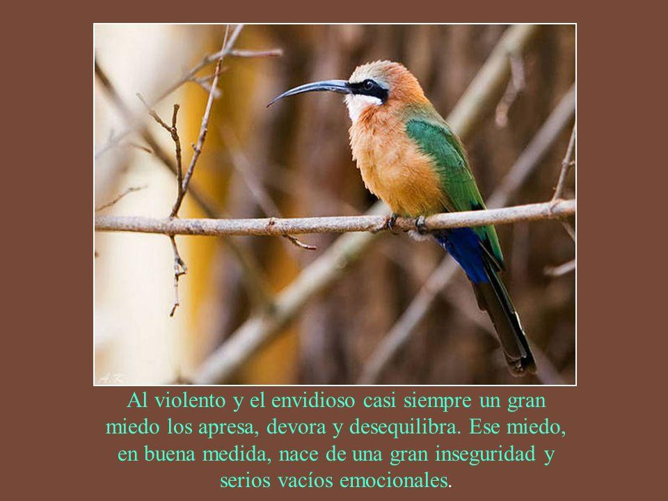 Por eso dijo un sabio: cuando te sientes, siéntate; cuando camines, camina; cuando ores, ora. Aprende a respirar, huye del ruido y el acelere, y vive