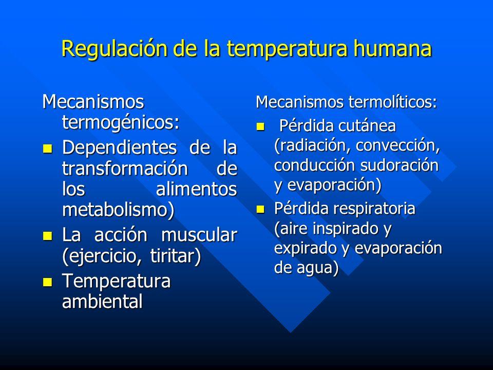 Mecanismos termogénicos: Dependientes de la transformación de los alimentos metabolismo) Dependientes de la transformación de los alimentos metabolism