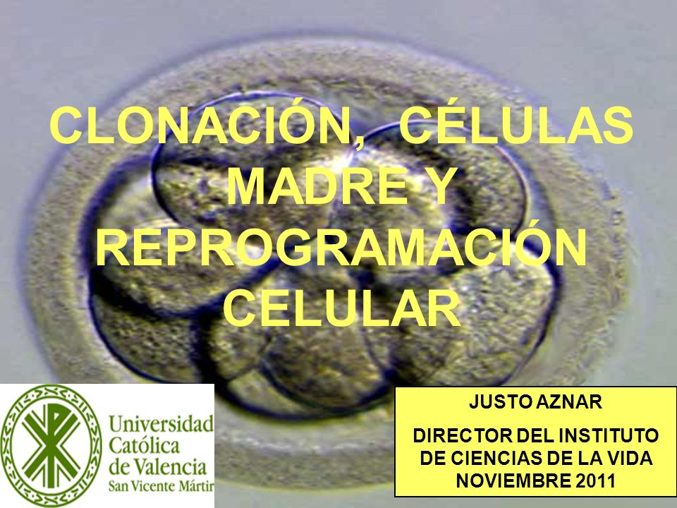 32 HIBRIDACIÓN HOMBRE ANIMAL JUSTIFICACIÓN Sustituir los óvulos humanos en el proceso de clonación