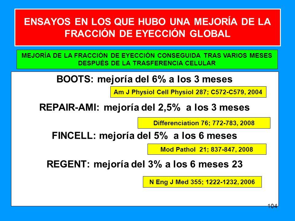 ENSAYOS EN LOS QUE HUBO UNA MEJORÍA DE LA FRACCIÓN DE EYECCIÓN GLOBAL BOOTS: mejoría del 6% a los 3 meses REPAIR-AMI: mejoría del 2,5% a los 3 meses FINCELL: mejoría del 5% a los 6 meses REGENT: mejoría del 3% a los 6 meses 23 104 MEJORÍA DE LA FRACCIÓN DE EYECCIÓN CONSEGUIDA TRAS VARIOS MESES DESPUÉS DE LA TRASFERENCIA CELULAR Am J Physiol Cell Physiol 287; C572-C579, 2004 Differenciation 76; 772-783, 2008 Mod Pathol 21; 837-847, 2008 N Eng J Med 355; 1222-1232, 2006