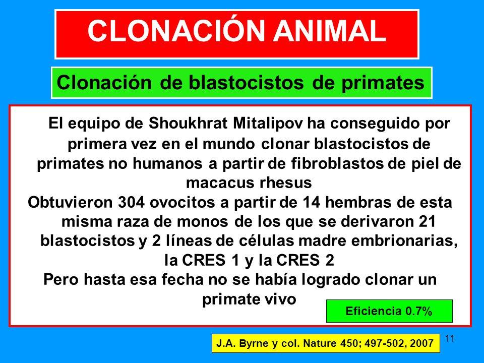 11 El equipo de Shoukhrat Mitalipov ha conseguido por primera vez en el mundo clonar blastocistos de primates no humanos a partir de fibroblastos de piel de macacus rhesus Obtuvieron 304 ovocitos a partir de 14 hembras de esta misma raza de monos de los que se derivaron 21 blastocistos y 2 líneas de células madre embrionarias, la CRES 1 y la CRES 2 Pero hasta esa fecha no se había logrado clonar un primate vivo J.A.