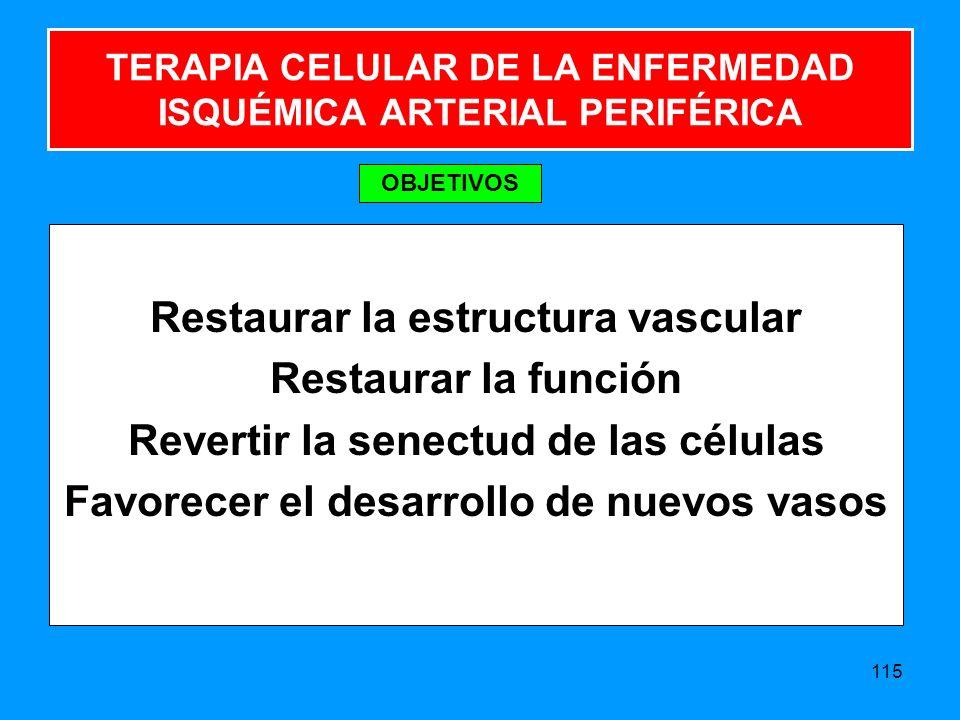 TERAPIA CELULAR DE LA ENFERMEDAD ISQUÉMICA ARTERIAL PERIFÉRICA Restaurar la estructura vascular Restaurar la función Revertir la senectud de las células Favorecer el desarrollo de nuevos vasos 115 OBJETIVOS
