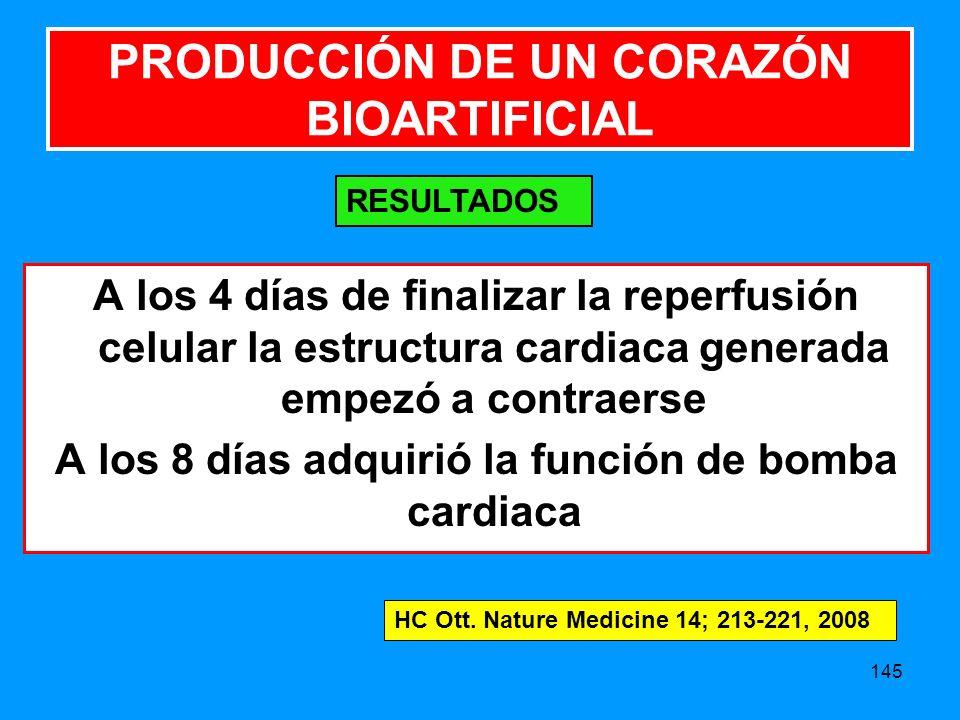 145 A los 4 días de finalizar la reperfusión celular la estructura cardiaca generada empezó a contraerse A los 8 días adquirió la función de bomba cardiaca PRODUCCIÓN DE UN CORAZÓN BIOARTIFICIAL RESULTADOS HC Ott.