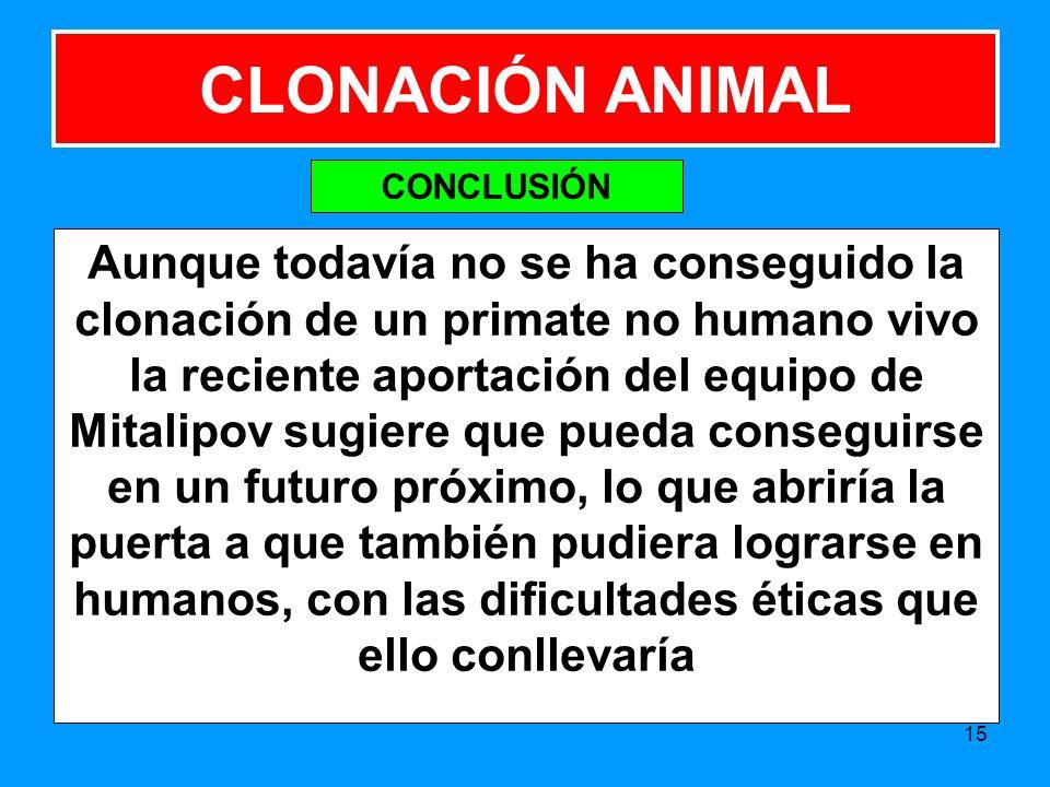 Aunque todavía no se ha conseguido la clonación de un primate no humano vivo la reciente aportación del equipo de Mitalipov sugiere que pueda conseguirse en un futuro próximo, lo que abriría la puerta a que también pudiera lograrse en humanos, con las dificultades éticas que ello conllevaría 15 CLONACIÓN ANIMAL CONCLUSIÓN