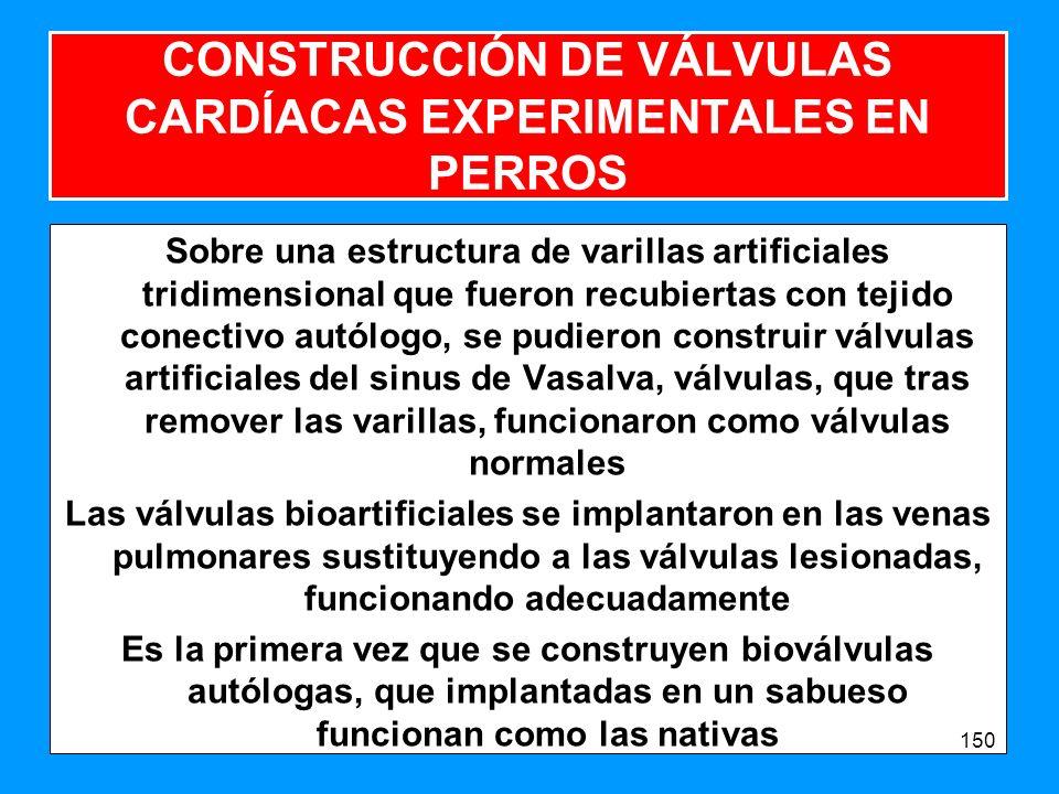CONSTRUCCIÓN DE VÁLVULAS CARDÍACAS EXPERIMENTALES EN PERROS Sobre una estructura de varillas artificiales tridimensional que fueron recubiertas con tejido conectivo autólogo, se pudieron construir válvulas artificiales del sinus de Vasalva, válvulas, que tras remover las varillas, funcionaron como válvulas normales Las válvulas bioartificiales se implantaron en las venas pulmonares sustituyendo a las válvulas lesionadas, funcionando adecuadamente Es la primera vez que se construyen bioválvulas autólogas, que implantadas en un sabueso funcionan como las nativas 150