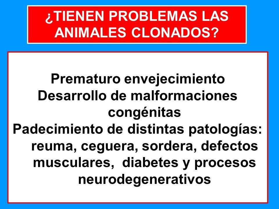16 ¿TIENEN PROBLEMAS LAS ANIMALES CLONADOS.