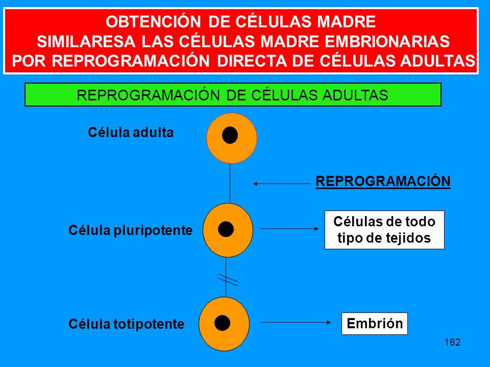 162 Célula adulta Célula pluripotente Células de todo tipo de tejidos REPROGRAMACIÓN REPROGRAMACIÓN DE CÉLULAS ADULTAS Célula totipotente Embrión OBTENCIÓN DE CÉLULAS MADRE SIMILARESA LAS CÉLULAS MADRE EMBRIONARIAS POR REPROGRAMACIÓN DIRECTA DE CÉLULAS ADULTAS