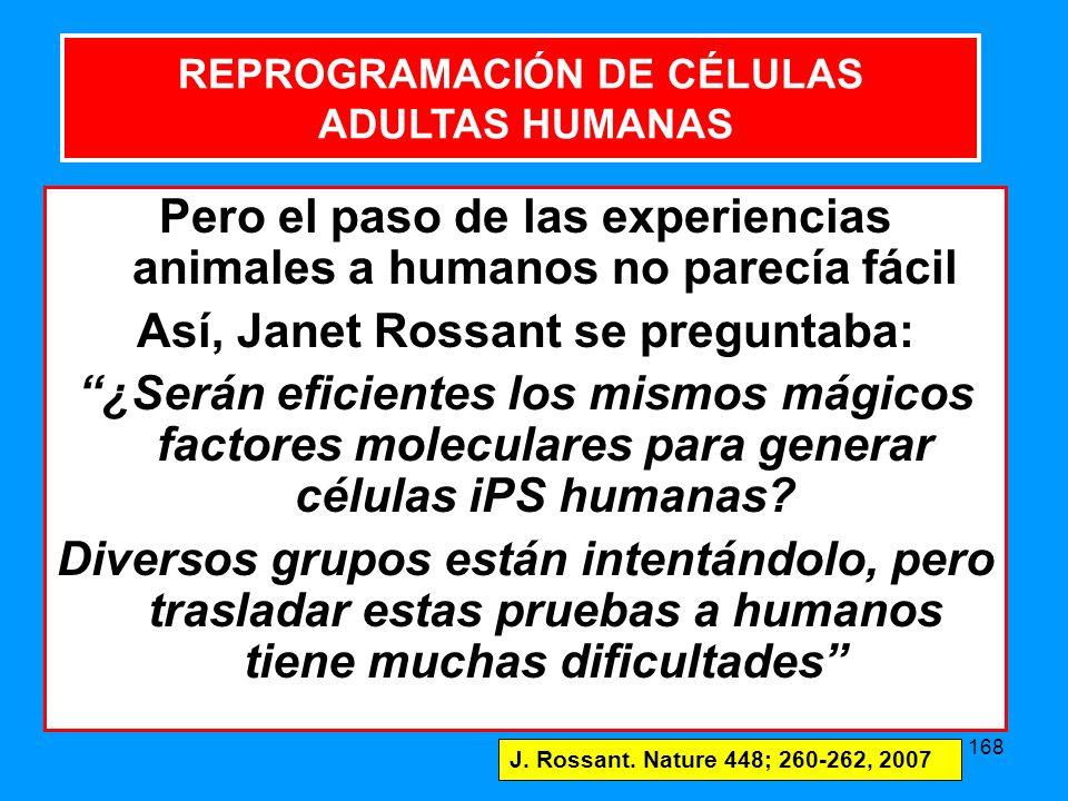 168 REPROGRAMACIÓN DE CÉLULAS ADULTAS HUMANAS Pero el paso de las experiencias animales a humanos no parecía fácil Así, Janet Rossant se preguntaba: ¿Serán eficientes los mismos mágicos factores moleculares para generar células iPS humanas.