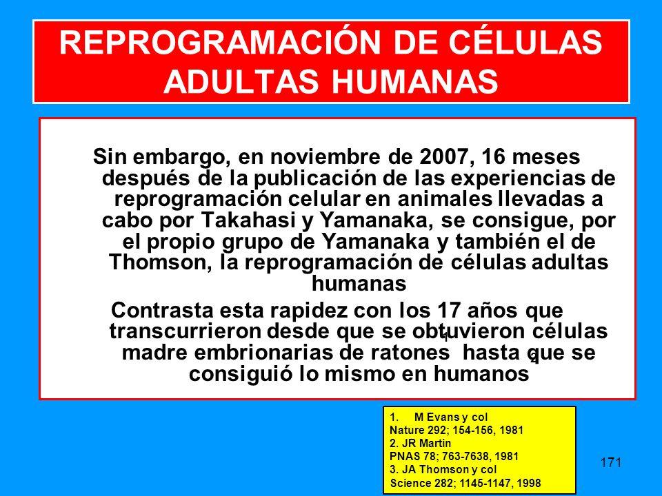 171 REPROGRAMACIÓN DE CÉLULAS ADULTAS HUMANAS Sin embargo, en noviembre de 2007, 16 meses después de la publicación de las experiencias de reprogramación celular en animales llevadas a cabo por Takahasi y Yamanaka, se consigue, por el propio grupo de Yamanaka y también el de Thomson, la reprogramación de células adultas humanas Contrasta esta rapidez con los 17 años que transcurrieron desde que se obtuvieron células madre embrionarias de ratones hasta que se consiguió lo mismo en humanos 1 2 1.M Evans y col Nature 292; 154-156, 1981 2.