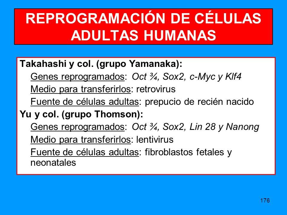 176 REPROGRAMACIÓN DE CÉLULAS ADULTAS HUMANAS Takahashi y col.
