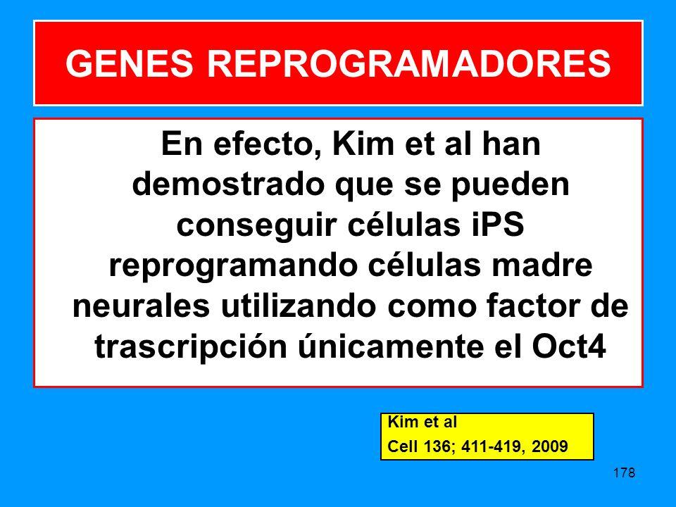 178 En efecto, Kim et al han demostrado que se pueden conseguir células iPS reprogramando células madre neurales utilizando como factor de trascripción únicamente el Oct4 GENES REPROGRAMADORES Kim et al Cell 136; 411-419, 2009