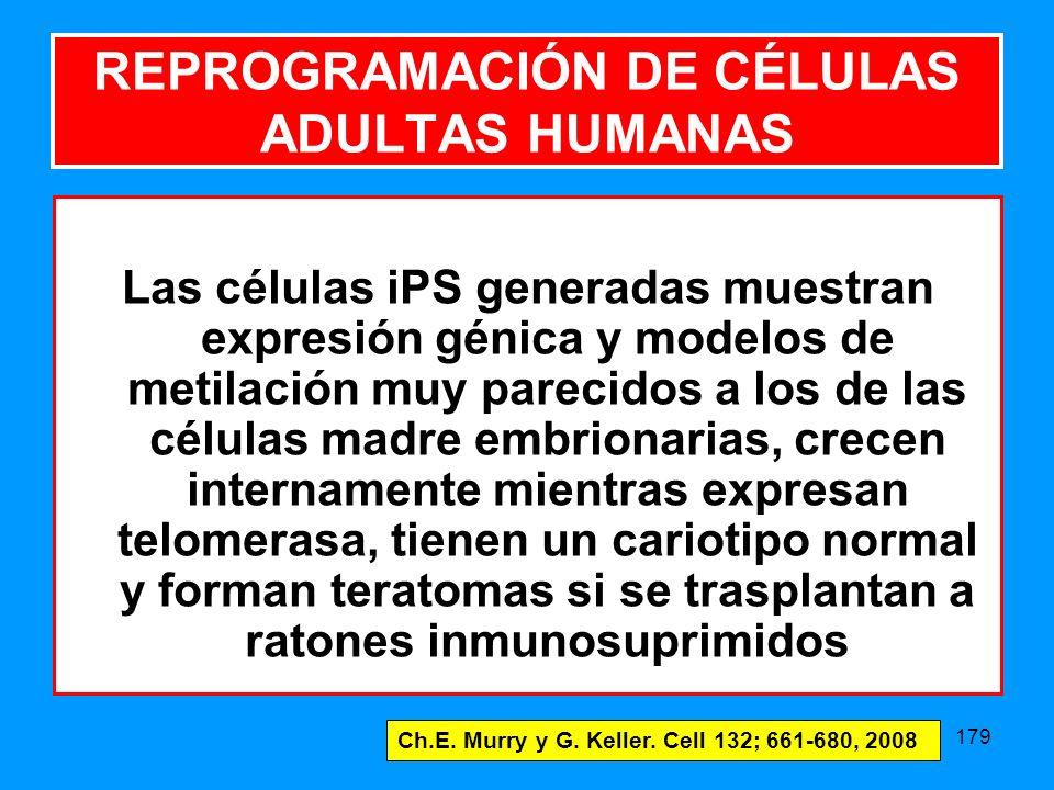 179 Las células iPS generadas muestran expresión génica y modelos de metilación muy parecidos a los de las células madre embrionarias, crecen internamente mientras expresan telomerasa, tienen un cariotipo normal y forman teratomas si se trasplantan a ratones inmunosuprimidos Ch.E.