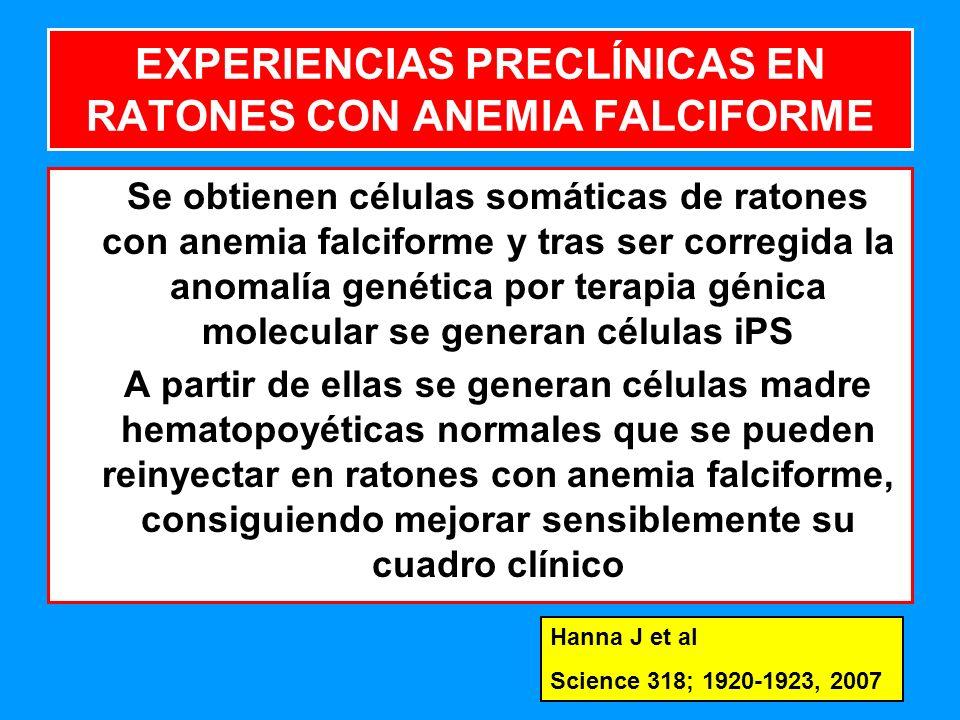 213 EXPERIENCIAS PRECLÍNICAS EN RATONES CON ANEMIA FALCIFORME Se obtienen células somáticas de ratones con anemia falciforme y tras ser corregida la anomalía genética por terapia génica molecular se generan células iPS A partir de ellas se generan células madre hematopoyéticas normales que se pueden reinyectar en ratones con anemia falciforme, consiguiendo mejorar sensiblemente su cuadro clínico Hanna J et al Science 318; 1920-1923, 2007