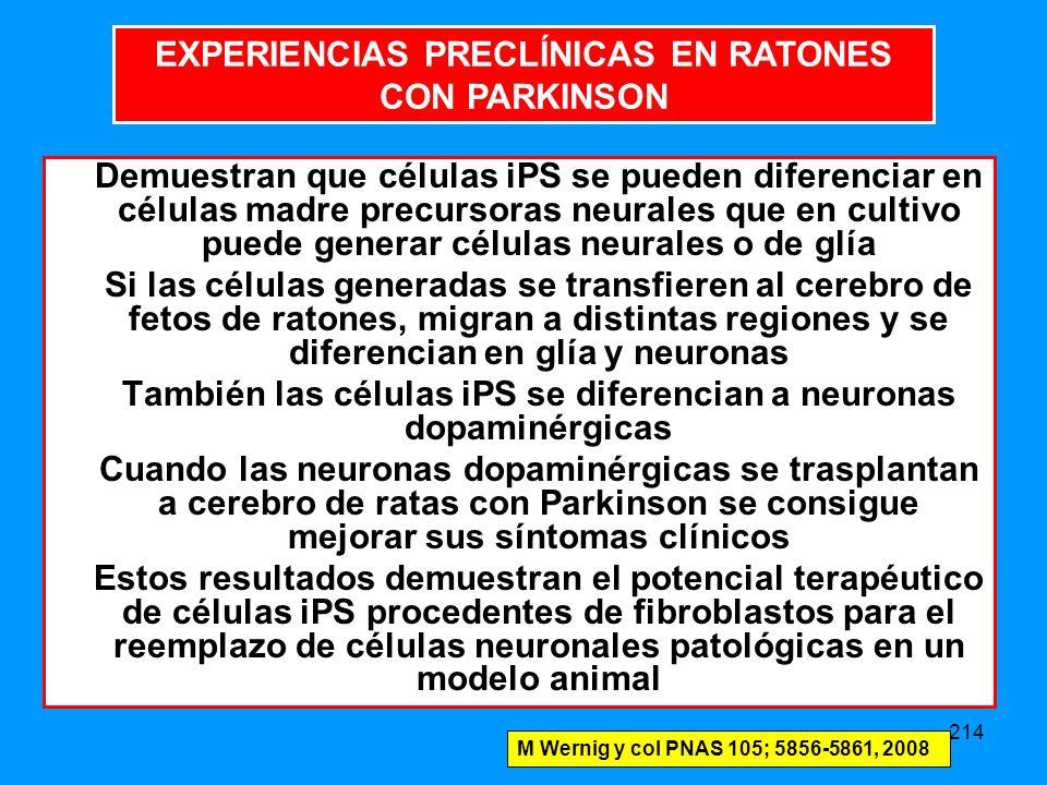 214 Demuestran que células iPS se pueden diferenciar en células madre precursoras neurales que en cultivo puede generar células neurales o de glía Si las células generadas se transfieren al cerebro de fetos de ratones, migran a distintas regiones y se diferencian en glía y neuronas También las células iPS se diferencian a neuronas dopaminérgicas Cuando las neuronas dopaminérgicas se trasplantan a cerebro de ratas con Parkinson se consigue mejorar sus síntomas clínicos Estos resultados demuestran el potencial terapéutico de células iPS procedentes de fibroblastos para el reemplazo de células neuronales patológicas en un modelo animal M Wernig y col PNAS 105; 5856-5861, 2008 EXPERIENCIAS PRECLÍNICAS EN RATONES CON PARKINSON