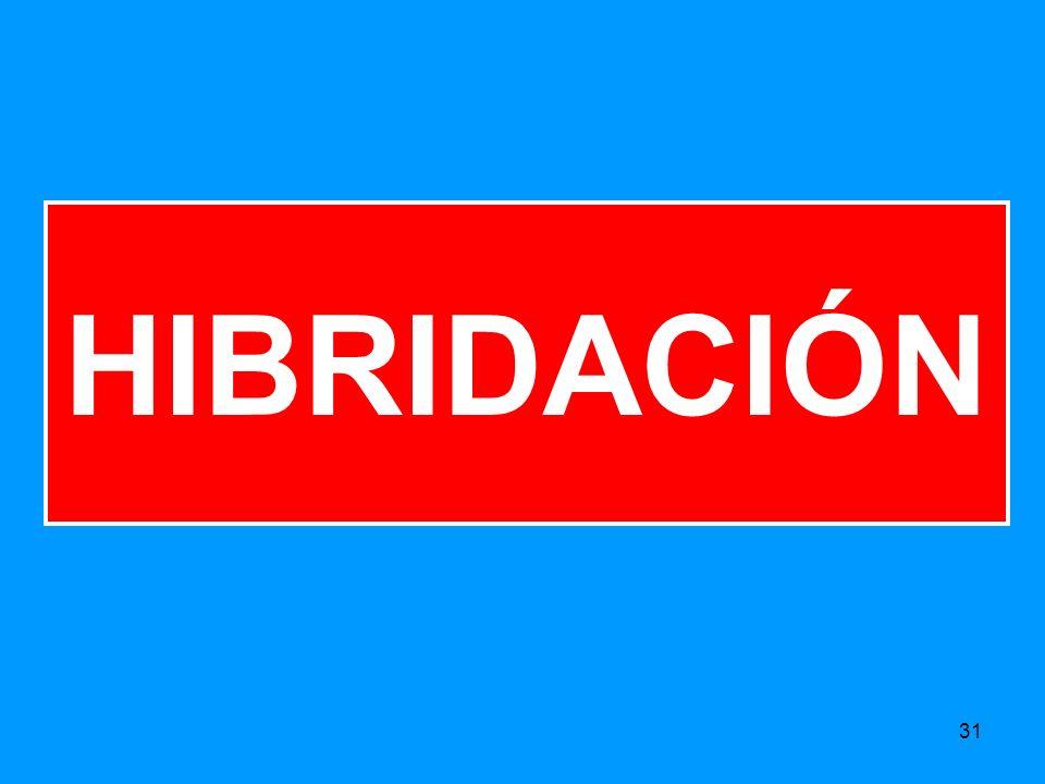 31 HIBRIDACIÓN
