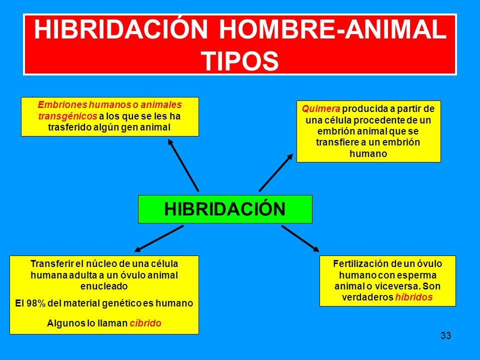 33 HIBRIDACIÓN HOMBRE-ANIMAL TIPOS Embriones humanos o animales transgénicos a los que se les ha trasferido algún gen animal Transferir el núcleo de una célula humana adulta a un óvulo animal enucleado El 98% del material genético es humano Algunos lo llaman cíbrido HIBRIDACIÓN Fertilización de un óvulo humano con esperma animal o viceversa.