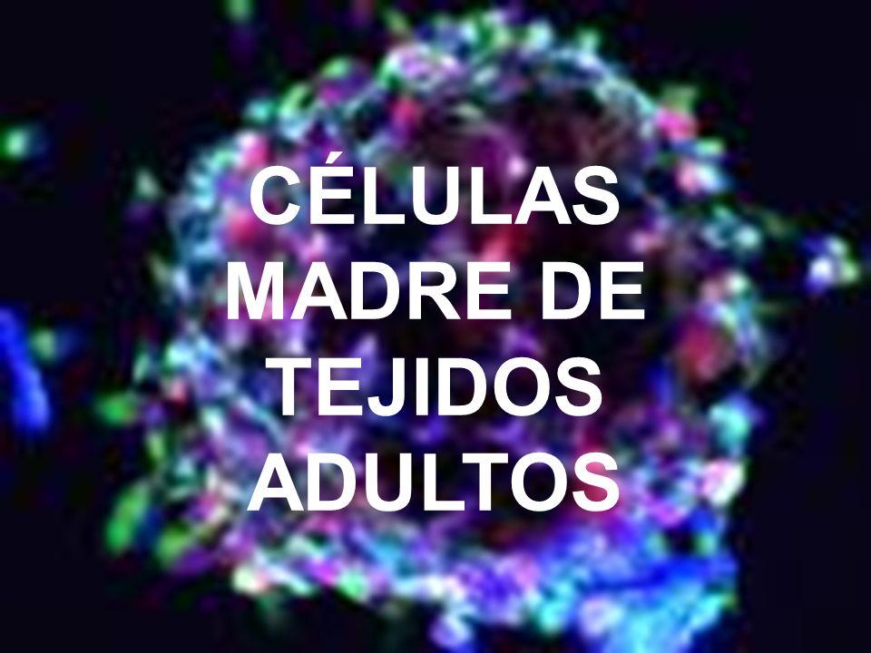79 CÉLULAS MADRE DE TEJIDOS ADULTOS