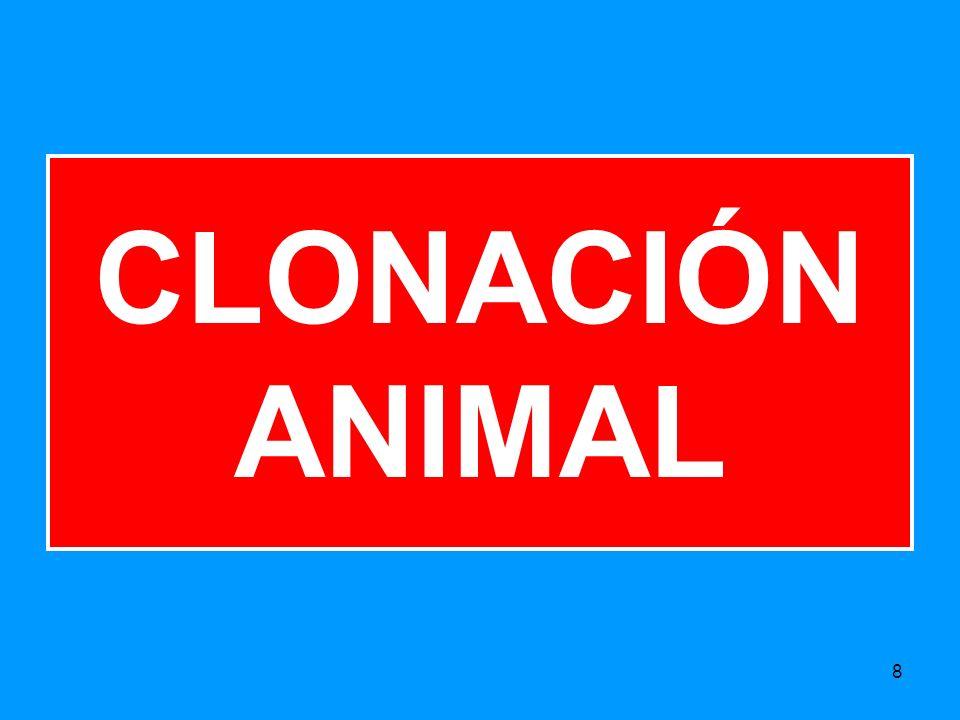 8 CLONACIÓN ANIMAL