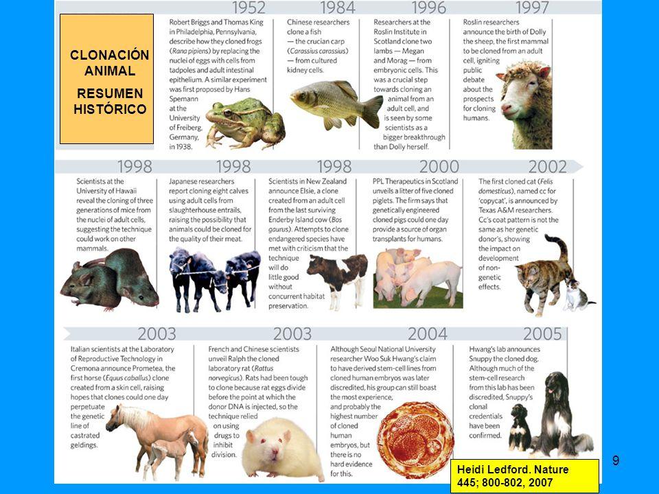 190 Generan células iPS a partir de: Hepatocitos de ratón utilizando adenovirus para transferir factores reprogramadores OBTENCIÓN DE CÉLULAS iPS SIN INTEGRACIÓN DEL GENOMA VIRAL Stadtfeld et al Science 322; 945-949, 2008 Fibroblastos de embriones de ratón utilizando plásmidos Okita et al (Yamanaka) Science 322; 949-953, 2008 Kaji et al Nature DOI: 10.1038/nature 07864, 2009