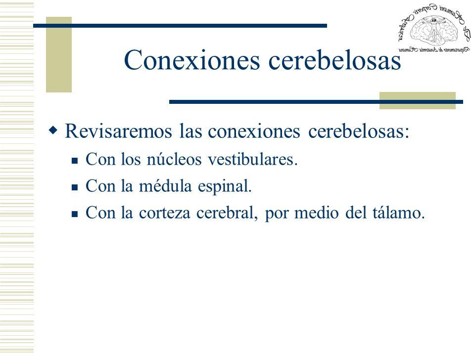 Conexiones cerebelosas Revisaremos las conexiones cerebelosas: Con los núcleos vestibulares. Con la médula espinal. Con la corteza cerebral, por medio