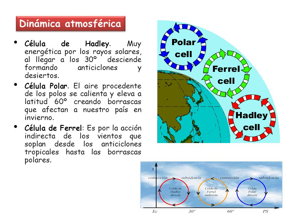 Dinámica atmosférica Célula de Hadley. Muy energética por los rayos solares, al llegar a los 30º desciende formando anticiclones y desiertos. Célula P