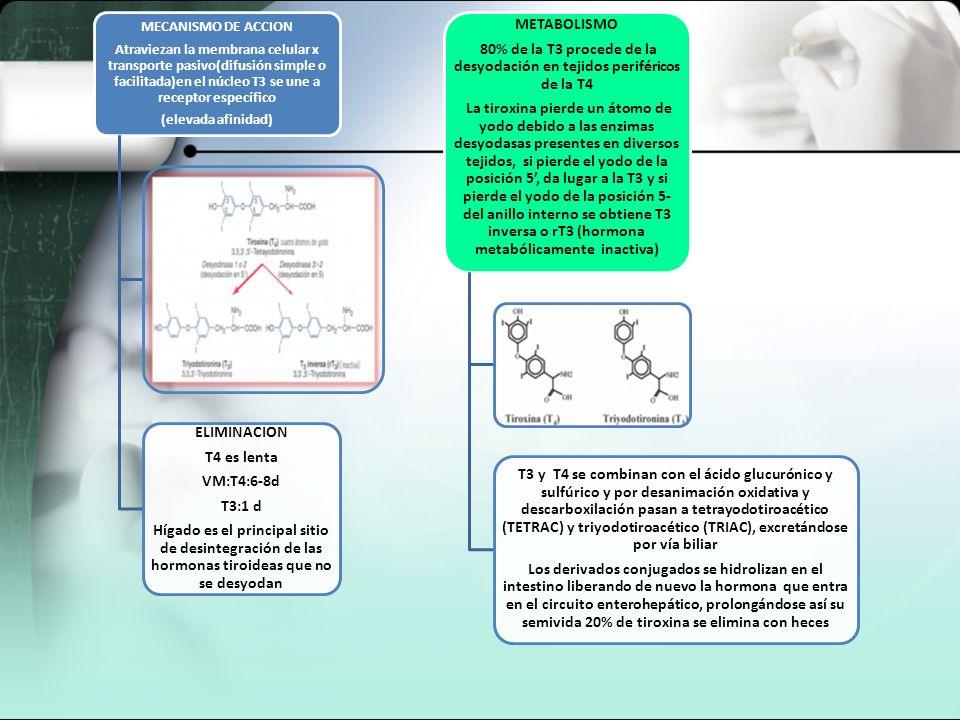 MECANISMO DE ACCION Atraviezan la membrana celular x transporte pasivo(difusión simple o facilitada)en el núcleo T3 se une a receptor específico (elev