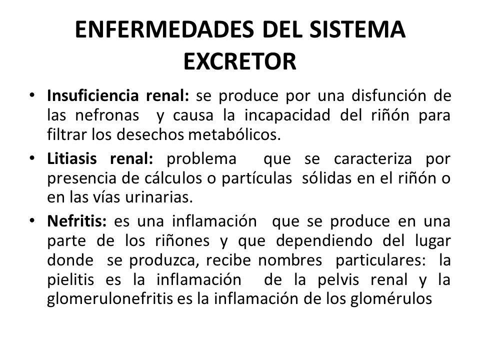 ENFERMEDADES DEL SISTEMA EXCRETOR Insuficiencia renal: se produce por una disfunción de las nefronas y causa la incapacidad del riñón para filtrar los desechos metabólicos.