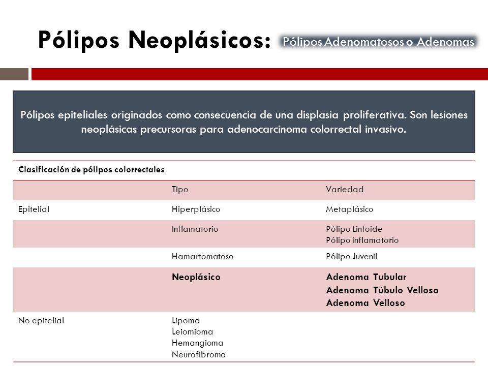 Pólipos Neoplásicos: Pólipos epiteliales originados como consecuencia de una displasia proliferativa. Son lesiones neoplásicas precursoras para adenoc