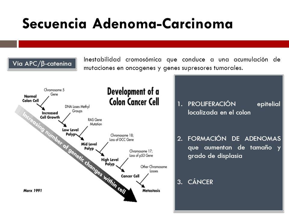 Secuencia Adenoma-Carcinoma Vía APC/ β -catenina Inestabilidad cromosómica que conduce a una acumulación de mutaciones en oncogenes y genes supresores