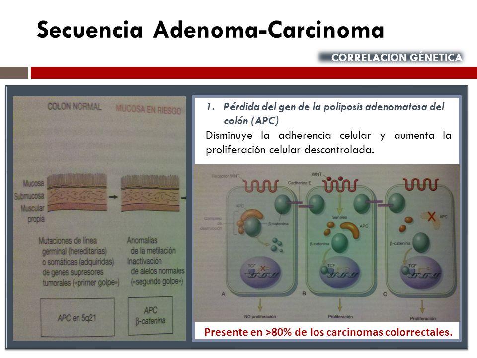 Secuencia Adenoma-Carcinoma CORRELACION GÉNETICA 1.Pérdida del gen de la poliposis adenomatosa del colón (APC) Disminuye la adherencia celular y aumen
