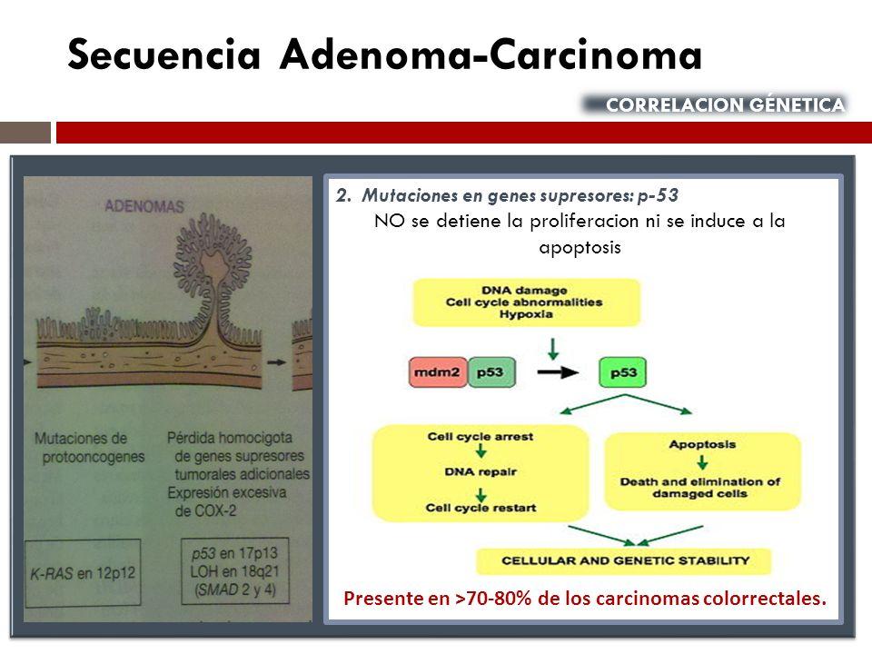 Secuencia Adenoma-Carcinoma CORRELACION GÉNETICA 2. Mutaciones en genes supresores: p-53 NO se detiene la proliferacion ni se induce a la apoptosis Pr