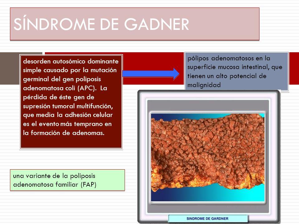 SÍNDROME DE GADNER desorden autosómico dominante simple causado por la mutación germinal del gen poliposis adenomatosa coli (APC). La pérdida de éste
