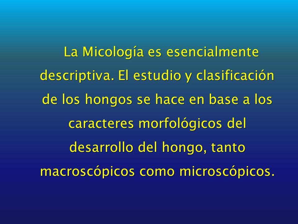 La Micología es esencialmente descriptiva. El estudio y clasificación de los hongos se hace en base a los caracteres morfológicos del desarrollo del h
