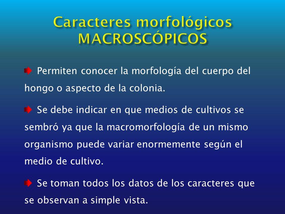 Permiten conocer la morfología del cuerpo del hongo o aspecto de la colonia. Se debe indicar en que medios de cultivos se sembró ya que la macromorfol