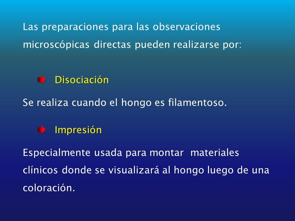 Las preparaciones para las observaciones microscópicas directas pueden realizarse por:Disociación Se realiza cuando el hongo es filamentoso.Impresión Especialmente usada para montar materiales clínicos donde se visualizará al hongo luego de una coloración.