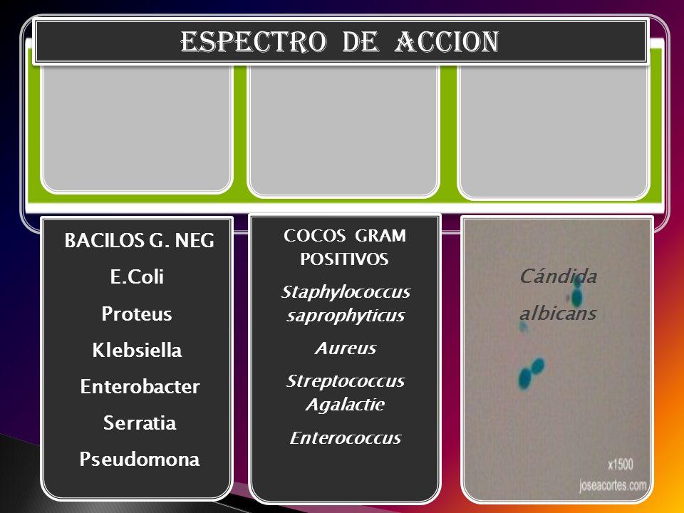 BACILOS G. NEG E.Coli Proteus Klebsiella Enterobacter Serratia Pseudomona COCOS GRAM POSITIVOS Staphylococcus saprophyticus Aureus Streptococcus Agala