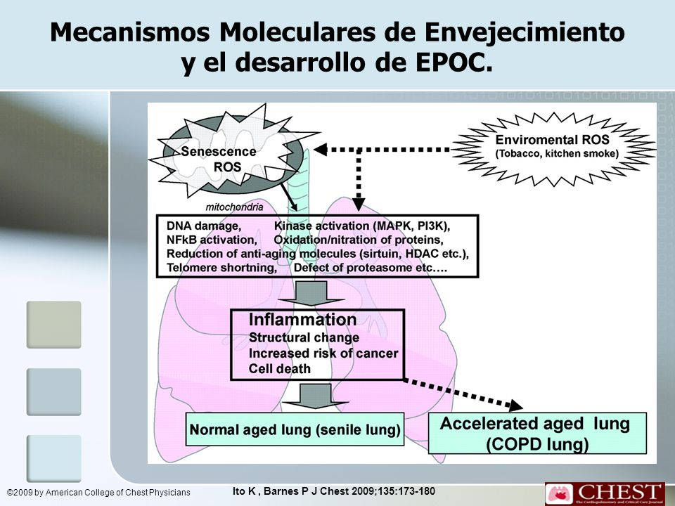 Mecanismos Moleculares de Envejecimiento y el desarrollo de EPOC. Ito K, Barnes P J Chest 2009;135:173-180 ©2009 by American College of Chest Physicia