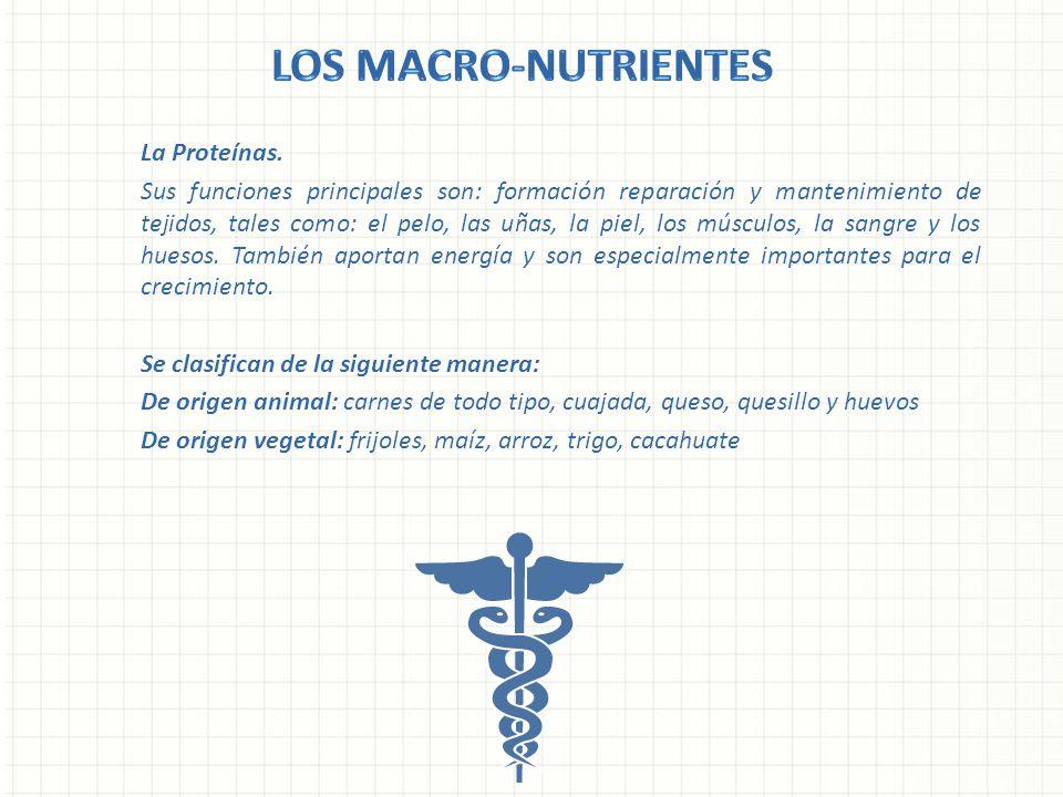 La Proteínas. Sus funciones principales son: formación reparación y mantenimiento de tejidos, tales como: el pelo, las uñas, la piel, los músculos, la