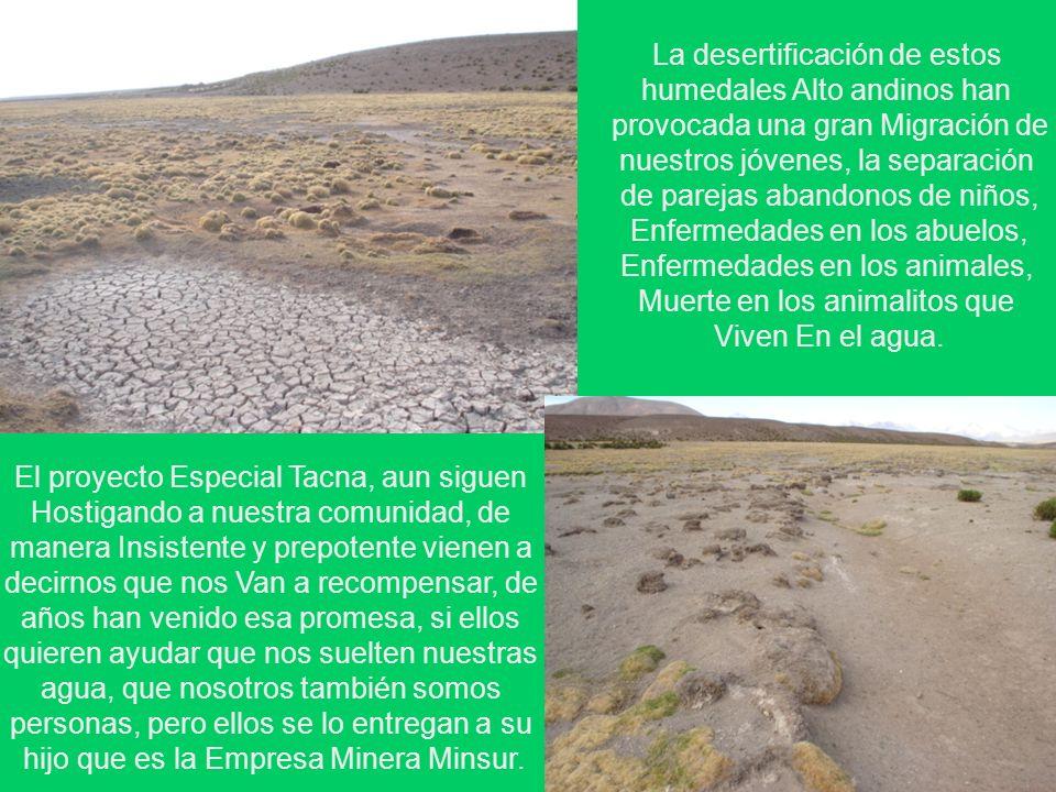 La desertificación de estos humedales Alto andinos han provocada una gran Migración de nuestros jóvenes, la separación de parejas abandonos de niños,
