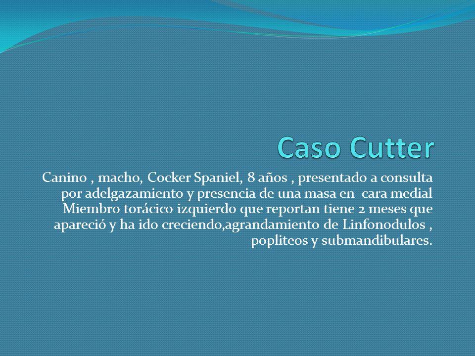 Citología Propietario Ulises Muñoz Nombre Cutter Fecha 30 – Agosto – 2008 Sexo Macho No.