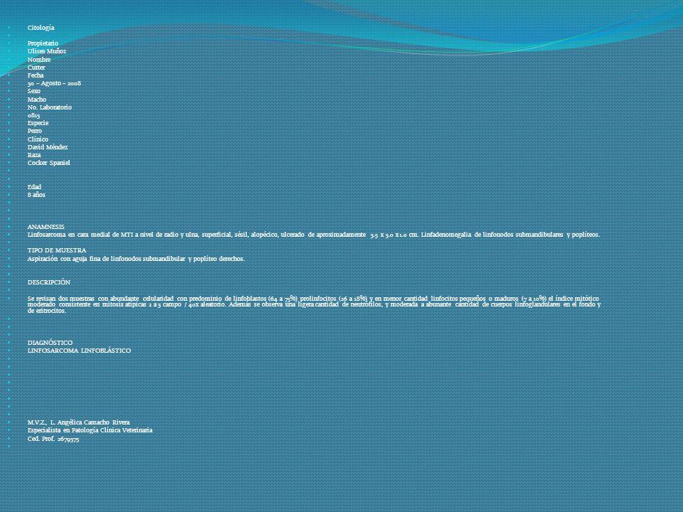 Citología Propietario Ulises Muñoz Nombre Cutter Fecha 30 – Agosto – 2008 Sexo Macho No. Laboratorio 0813 Especie Perro Clínico David Méndez Raza Cock
