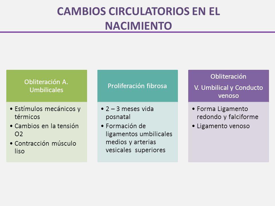 CAMBIOS CIRCULATORIOS EN EL NACIMIENTO