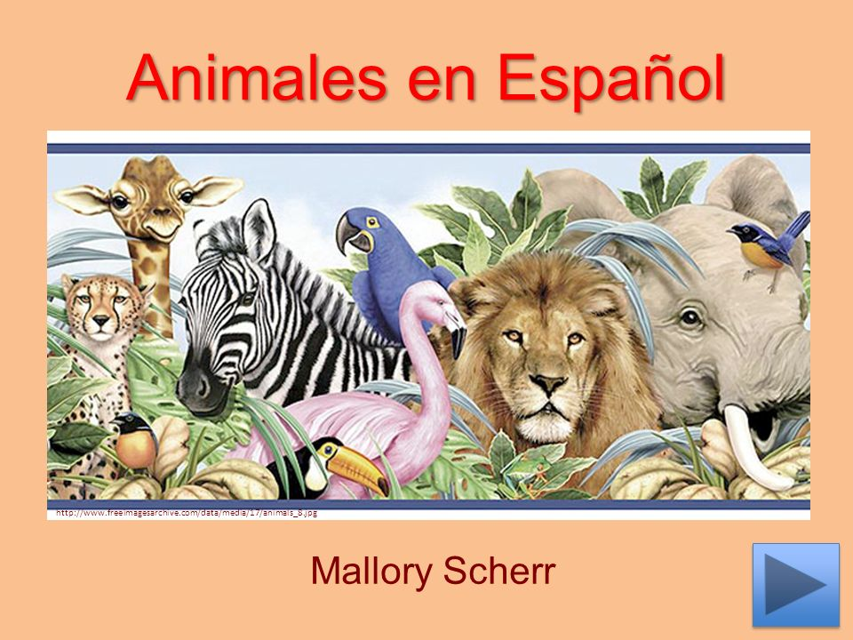 Animales en Español Mallory Scherr http://www.freeimagesarchive.com/data/media/17/animals_8.jpg