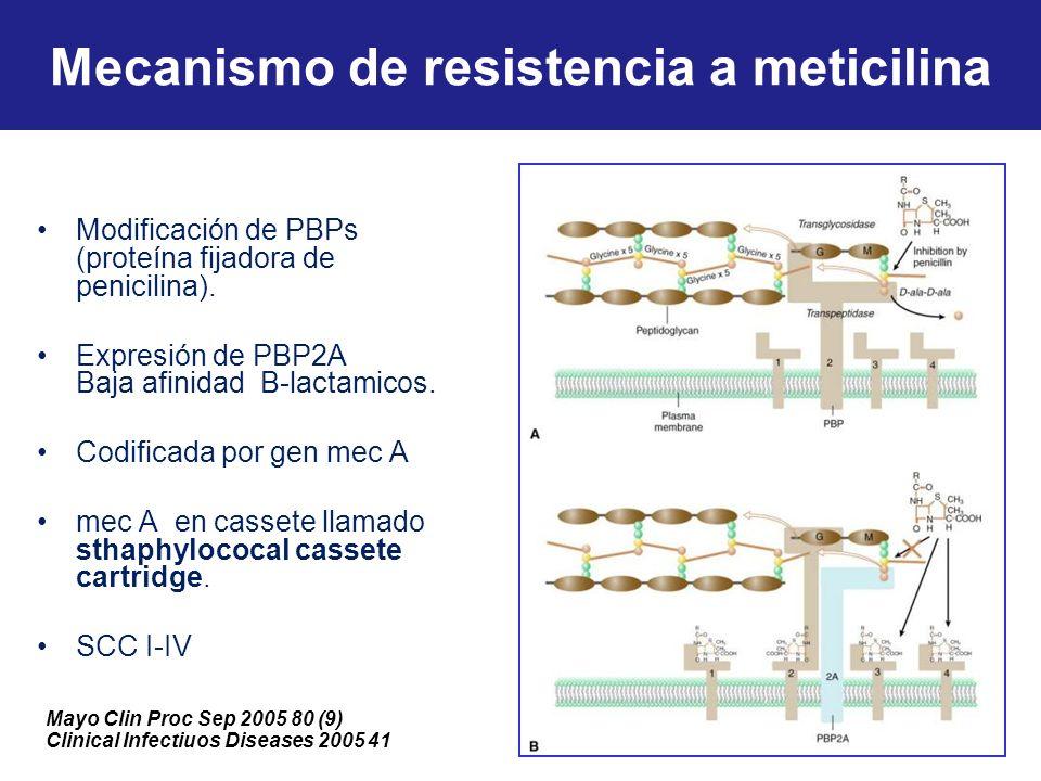 Mecanismo de resistencia a meticilina Modificación de PBPs (proteína fijadora de penicilina). Expresión de PBP2A Baja afinidad B-lactamicos. Codificad